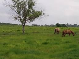 Fazenda na PA Acará/56 Hectares