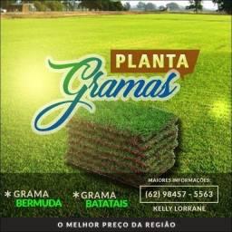 Plantações de gramas