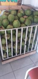 Grade pra coco