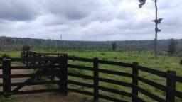 Fazendas preço baixo Santarém Oeste do Pará