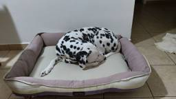Cama de cachorro Star Dog  0,80 x 0,60