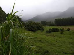 Velleda oferece fazenda 78 hectares, sendo 30ha com eucaliptos + de 13 anos