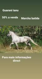 Guarani Ianu 50%