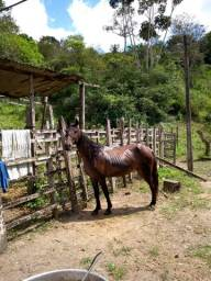 Égua Machadora
