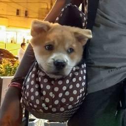 Bolsa de Transportar Animais