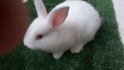Vende-se lindos filhotes de coelho nova Zelândia me chamar no zap ? *