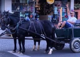Doação Parelha de Cavalo Crioulo