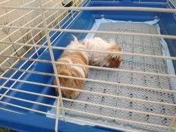 Viveiro para coelhos e caixa de transporte