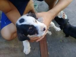 Doação de cachorros (as) - Filhotes
