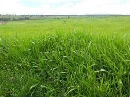 198 Alq. Terra Agricultável Vermelha Plana Argila 35% Com Entrada Oferta Condições