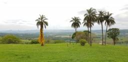 Excelente sitio para venda em Franca no Jardim Eden, com 1,86 alqueires, apenas 1,6 km do
