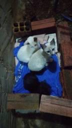 Doação de 3 gatinhos machos.resgatei do meio da rua.