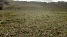 38 hectares em Dilermando de Aguiar, sendo dessas, 30 já de lavoura!