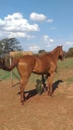 Cavalo Grande
