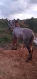 Cavalo pordo bom