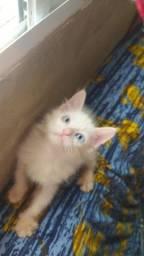 Gato para doção