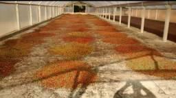 Título do anúncio: Pimenta do reino em grãos