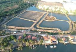 Fazenda de Camarão - Negócio Excelente!! Completa em Funcionamento - Água Salgada