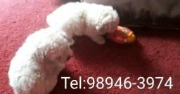 Poodle mini toy aceito cartão