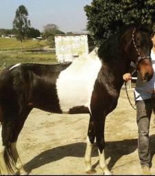 Vende se Cavalo manga larga