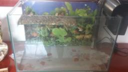 Aquaterrário (aquário para tartaruga) completo - barbada