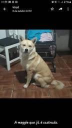 Doação de cadela castrada urgente