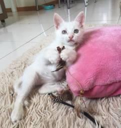 Doacao gatinho branco ?