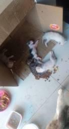 Lar temporário gatinhos