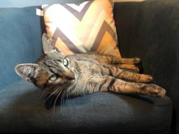 Gato filhote - Macho - Adoção Responsável