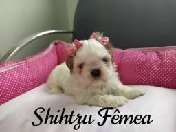 Fofurinha de Shihtzu fêmea, é a última!
