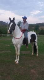 Égua Campolina - Marcha Picada