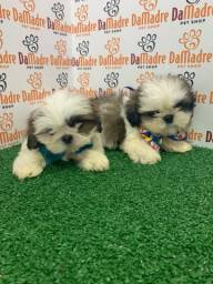 Shih tzu é no Da Madre Pet Shop