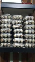 Ovos férteis codorna gigante