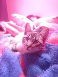 Doa-se gato macho com 8 meses