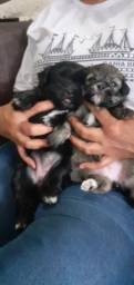 Cachorro macho 150 fêmea 200