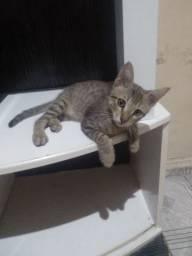 Gato filhote para doação.