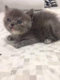 Doação-Gato