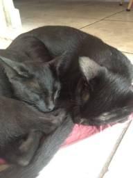 Doação de 2 gatinhos