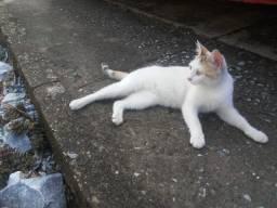 Linda gata de olhos verdes carinhosa (levo em sua casa em Betim)
