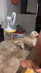 Banheiro inteligente pra cachorro