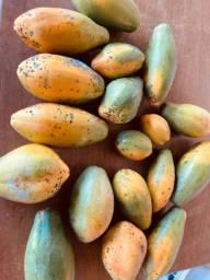 Mamão papaya orgânico