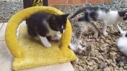 Doa-se gatinhos Urgente