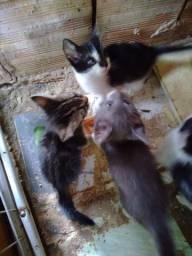 Doa-se gatos filhotes