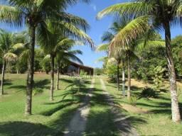 Fabio Paes Imóveis - Sítio 27.000m² muito bem cuidado com pequena plantação