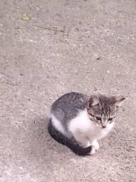Socão gatinhos