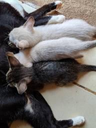 Doa se gatinhos filhotes