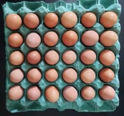 Ovos vermelhos de galinha caipira