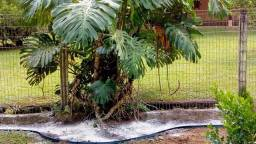 Paisagismo e manutenção de jardins