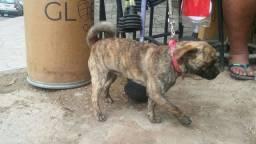 Vendo cachorro pug com srd ou troco