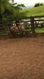 Cavalo criolo  2000